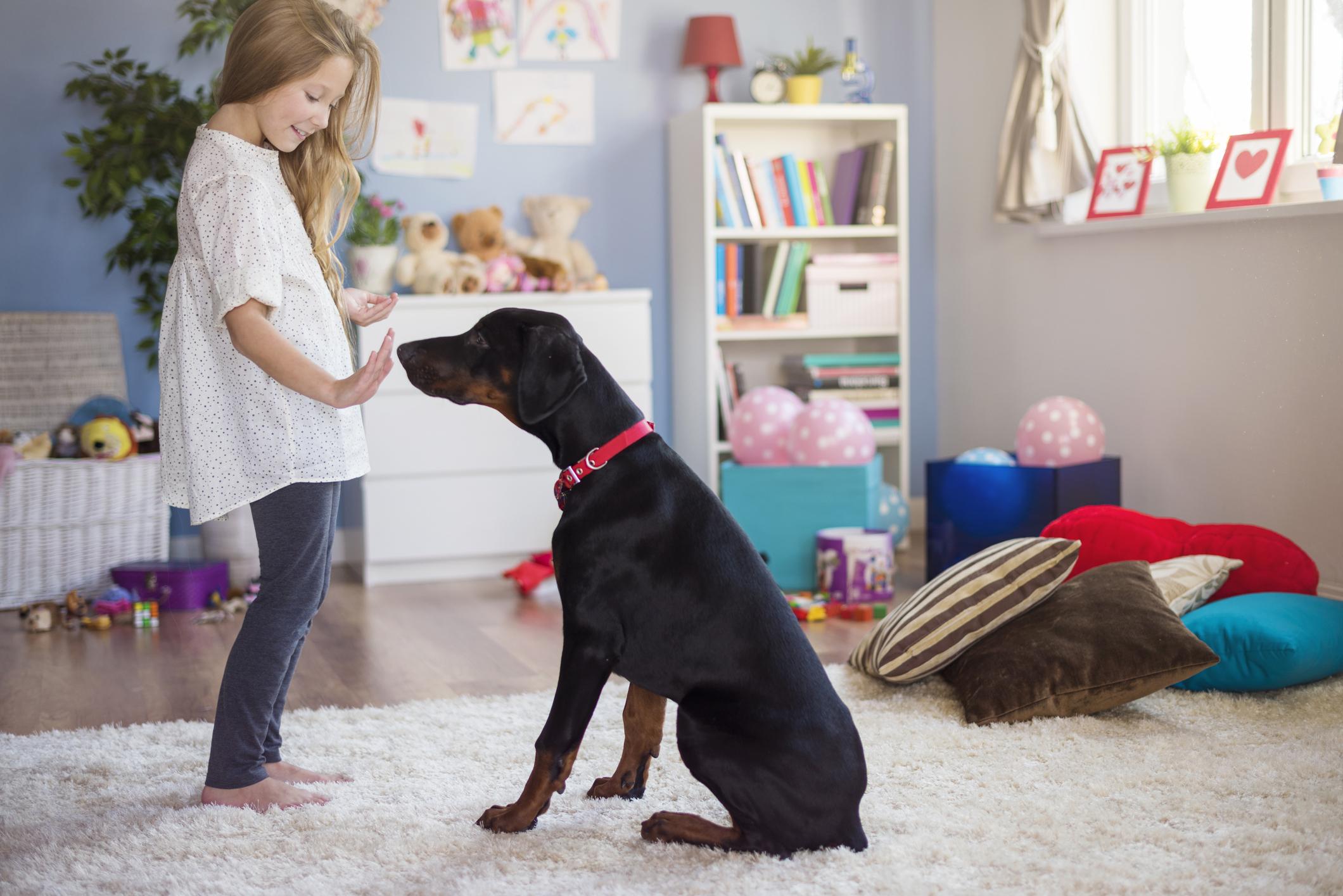 teaching-dog-tricks